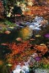 iPhone Photo Aquarium